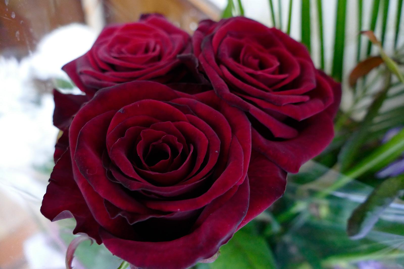 сказал, розы бордо в картинках задержку спуска