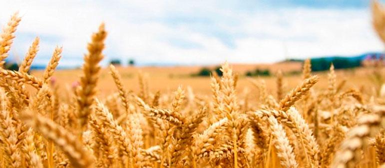 В 2016 году Украина собрала рекордный урожай