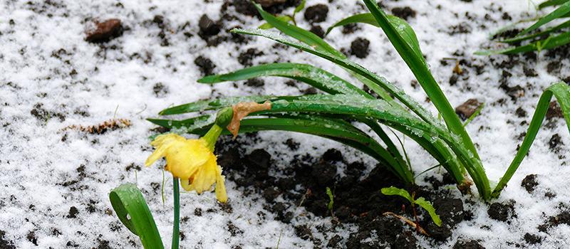 Апрельский снегопад в Изюме