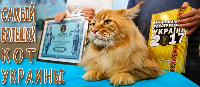 Самый большой кот Украины