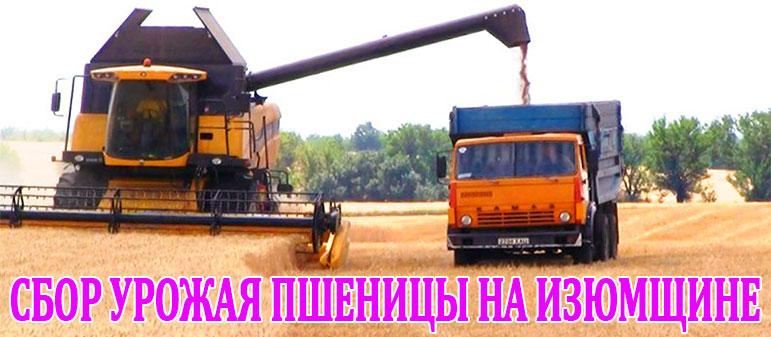 Сбор урожая пшеницы на Изюмщине