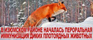 В Изюмском районе началась пероральная иммунизация диких плотоядных животных