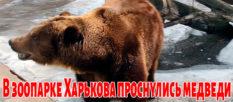 В зоопарке Харькова проснулись медведи [видео]