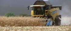 Хорошая погода способствует сбору хорошего урожая на Изюмщине